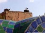 tn_marrakech051.jpg